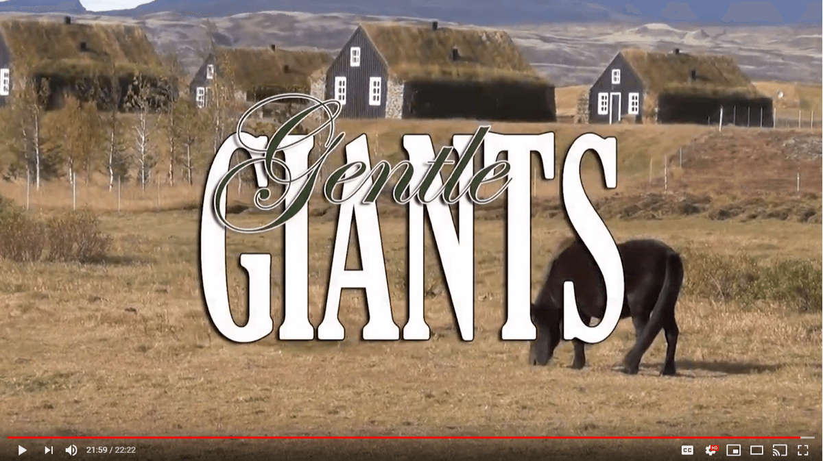 The Icelandic Horse On Gentle Giants Special Episode